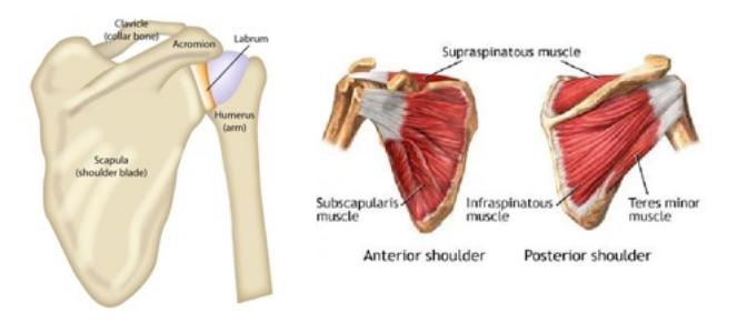 shoulder pain singapore